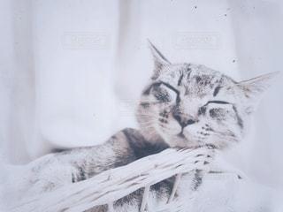 猫,風景,動物,リビング,モノクロ,カーテン,レトロ,家,ねこ,ペット,寝る,家具,フィルム,眠い,フィルム写真,ネコ,フィルムフォト,レトロラックス