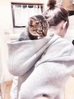 猫を抱いている人の写真・画像素材[2703161]