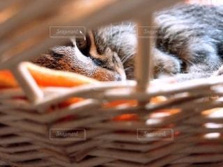 猫の瞳の写真・画像素材[2708267]