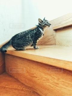 階段で・・・の写真・画像素材[2738903]