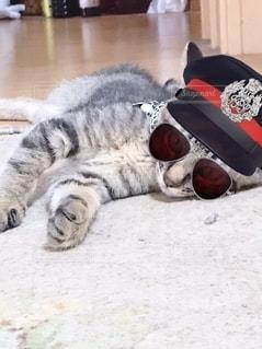 めがね猫の写真・画像素材[2760303]