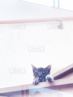 猫の写真・画像素材[2764202]