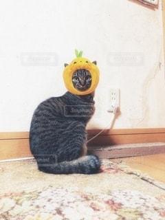 床に座っている猫の写真・画像素材[2779472]