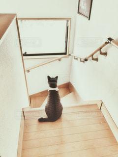 猫の写真・画像素材[2828524]