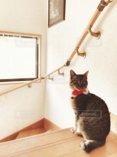 猫の写真・画像素材[2876459]