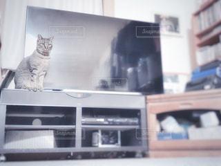 棚に座っている猫の写真・画像素材[2926722]
