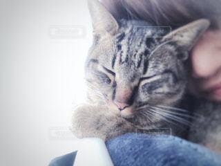 女性,猫,動物,リビング,屋内,景色,家,ペット,眠る,子猫,人物,人,癒し,キティ,ネコ,ネコ科の動物