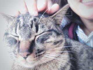 女性,猫,動物,リビング,かわいい,手,景色,家,指,ペット,眠る,子猫,人物,人,窓際,目,キティ,眠り猫,ネコ,ネコ科の動物