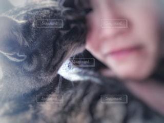 猫,動物,リビング,部屋,光,家,ペット,人物,人,窓際,目,キャット,見つめる,ネコ,なめる,ネコ科の動物