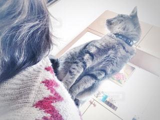 女性,猫,動物,屋内,家,ペット,人物,背中,座る,玄関,キャット,キティ,ネコ,肩