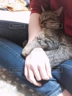 女性,猫,動物,屋内,手,ペット,人物,人,座る,睡眠,キャット,キティ,ネコ