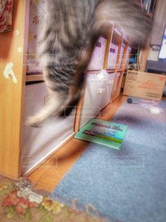 猫,動物,リビング,ジャンプ,飛ぶ,家,ペット,人物,ネコ