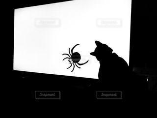 猫とくもの写真・画像素材[2981455]