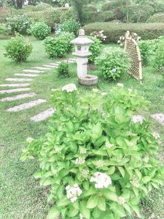 庭の緑の植物の写真・画像素材[3029889]