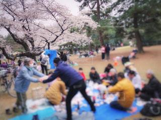 女性,男性,子ども,家族,5人以上,風景,公園,花,桜,群衆,屋外,ピンク,花見,樹木,人物,人,ドリンク,宴会,シート