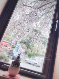 自然,風景,桜,屋内,車,窓,花見,景色,観光,鯉のぼり,旅行,栃木県,車両,那須,板室温泉