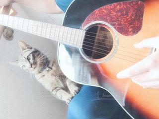 ギターと猫の写真・画像素材[3218504]
