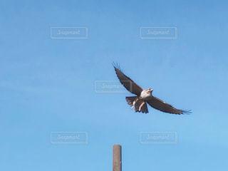 空を飛んでいる鳥の写真・画像素材[3240767]