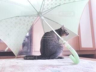 傘と猫の写真・画像素材[3673200]