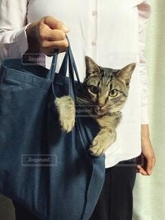 エコバッグと猫の写真・画像素材[3713467]