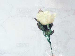 一輪のバラの写真・画像素材[4339116]