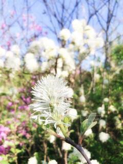 一輪の白い花の写真・画像素材[4339119]