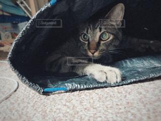 袋に隠れる猫の写真・画像素材[4415355]