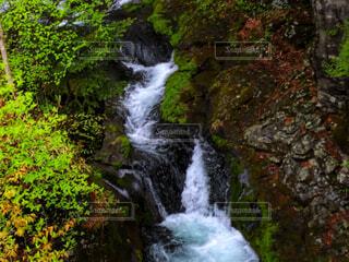 新緑と滝の写真・画像素材[4416700]