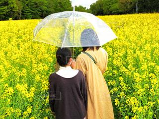 菜の花畑を傘をさし観光する2人の女性の写真・画像素材[4428373]