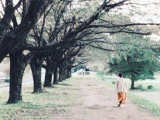 桜並木を歩く女性の後姿の写真・画像素材[4813523]