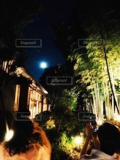 女性,自然,風景,空,建物,夜,夜景,屋外,樹木,月,人物,ライトアップ,竹,人,後姿,竹林,明るい