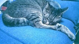 水色の座椅子で寝ている猫の写真・画像素材[4839789]
