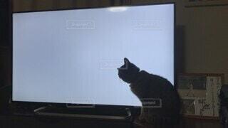 猫,動物,屋内,黒,壁,座る,ゲーム,テレビ,画面,モニター,見る,テキスト,探す,エレクトロニクス,音なし