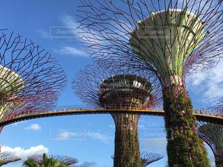 観光,旅行,シンガポール,レジャー,海外旅行,ガーデンズ・バイ・ザ・ベイ,レジャー・趣味
