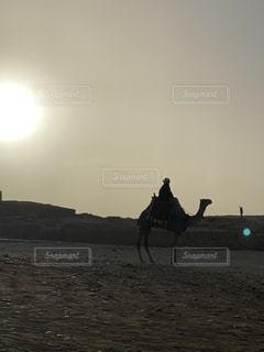 空,太陽,砂浜,光,ラクダ,エジプト,Egypt,ギザ,エジプシャン