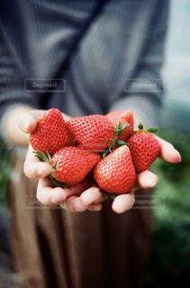 食べ物,赤,いちご,フルーツ,果物,果実,いちご狩り,栃木,ストロベリー,食材,写っているもの