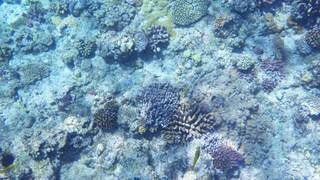 珊瑚の写真・画像素材[3364198]