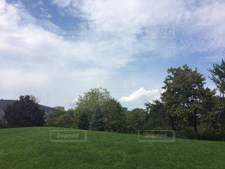 自然,公園,屋外,散歩,樹木