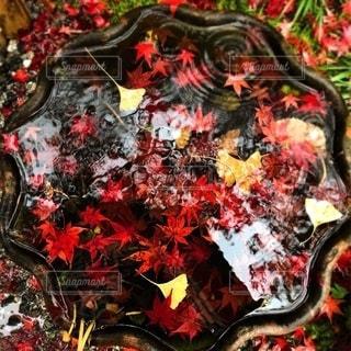 雨の日の紅葉も好きの写真・画像素材[2643148]
