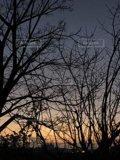 木々の影の写真・画像素材[1860433]