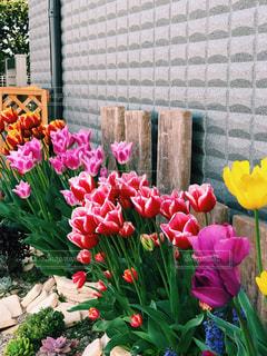 自然,花,夏,庭,ピンク,緑,植物,綺麗,晴れ,ウォーキング,散歩,黄色,お花,チューリップ,ガーデニング,外,可愛い,野外,赤色,お散歩,ピンク色,ライフスタイル,お出かけ,気持ちいい,緑色,晴れの日,ハレノヒ