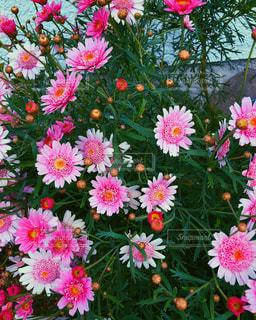 自然,花,ピンク,緑,植物,綺麗,散歩,外,可愛い,休日,野外,休み,ピンク色,ライフスタイル,緑色