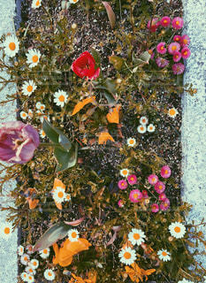 花壇の写真・画像素材[2353707]