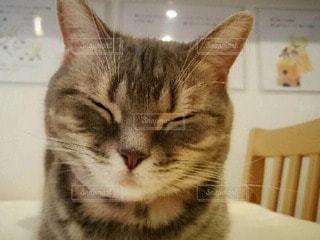猫の写真・画像素材[61622]