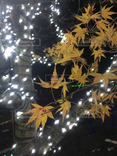 クリスマスイルミネーション - No.924135