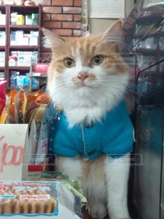僕が店長ですが、、、何か?の写真・画像素材[1260142]