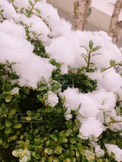 雪が積もるの写真・画像素材[1747660]