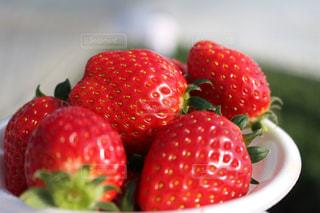 赤,かわいい,いちご,苺,フルーツ,果物,いちご狩り,フレッシュ