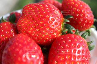 赤,かわいい,いちご,苺,フルーツ,果物,いちご狩り,フレッシュ,イチゴ,イチゴ狩り