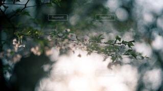 光の海に咲くの写真・画像素材[4160990]